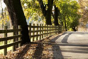 Roadside Fence by Lance Kuehne
