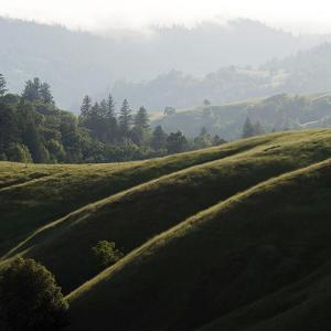 Rolling Fog and Rolling Hills by Lance Kuehne