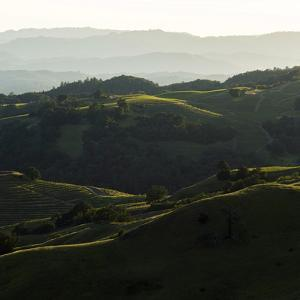 Vineyard Hills by Lance Kuehne