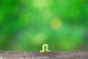 Crawling Inch Worm with Green Spring Background. by landio