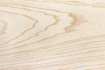 Swamp Ash Texture (Green Ash or Red Ash (Fraxinus Pennsylvanica )). Sought after Wood for Guitar Ma