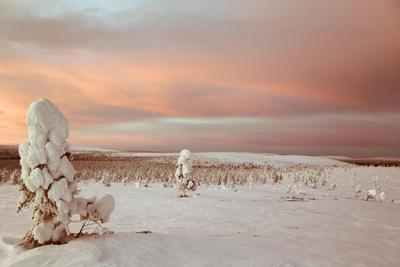 https://imgc.allpostersimages.com/img/posters/landscape-covered-in-snow-lapland-finland_u-L-Q10VFE60.jpg?artPerspective=n