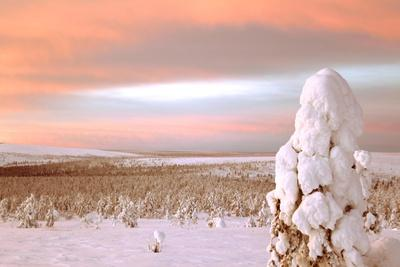 https://imgc.allpostersimages.com/img/posters/landscape-covered-in-snow-lapland-finland_u-L-Q10VH9E0.jpg?p=0