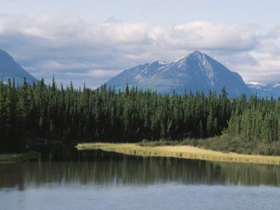 Landscape of Pine Trees Along Kluane Lake in Yukon, Canada