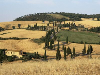 https://imgc.allpostersimages.com/img/posters/landscape-with-winding-road-lined-with-cypress-trees-monticchiello-near-pienza-tuscany-italy_u-L-P1TGG90.jpg?p=0