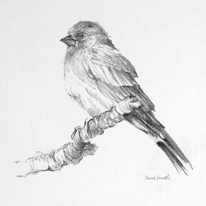 Bird Drawing I by Lanie Loreth