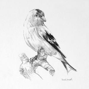 Bird Drawing II by Lanie Loreth