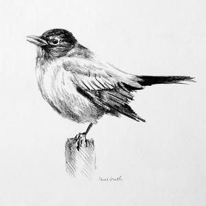 Bird Drawing III by Lanie Loreth