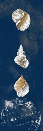Coastal Shells Panel I by Lanie Loreth