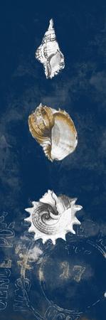 Coastal Shells Panel II by Lanie Loreth