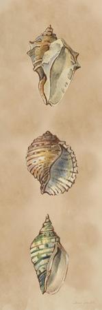 Seashells Panel II by Lanie Loreth