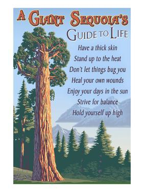 A Giant Sequoia's Guide to Life by Lantern Press