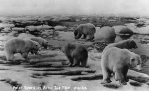 Alaska - Polar Bears on Arctic Ice Float by Lantern Press