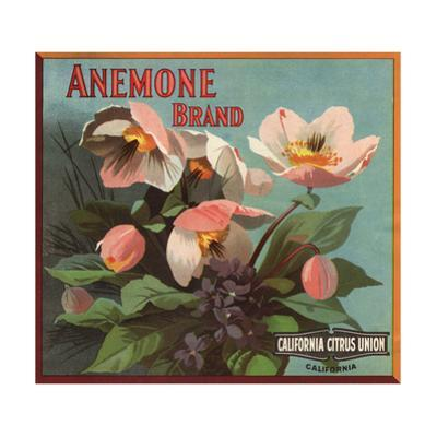 Anemone Brand - California - Citrus Crate Label by Lantern Press
