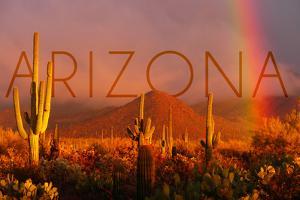Arizona - Cactus and Rainbow by Lantern Press