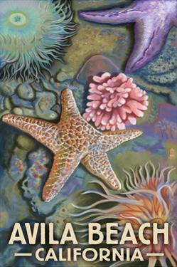 Avila Beach, California - Tidepool by Lantern Press