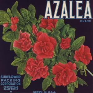 Azalea Brand - Porterville, California - Citrus Crate Label by Lantern Press