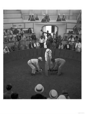 Beginning of a Cock Fight in Puerto Rico Photograph - San Juan, Puerto Rico by Lantern Press