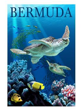 Bermuda - Sea Turtles by Lantern Press