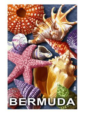 Bermuda - Shells by Lantern Press