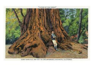 Big Basin, California - Father of the Forest Tree, 5000 Years old by Lantern Press