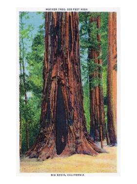 Big Basin, California - Mother Tree by Lantern Press