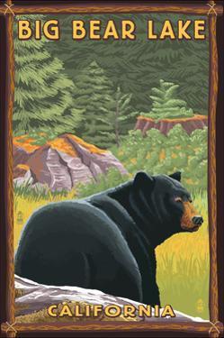 Big Bear Lake, California - Black Bear in Forest by Lantern Press