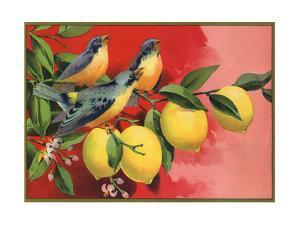 Birds on Lemon Branch - Citrus Crate Label by Lantern Press