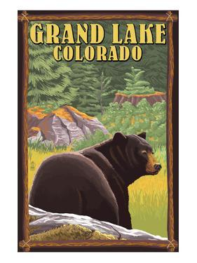 Black Bear in Forest - Grand Lake, Colorado by Lantern Press
