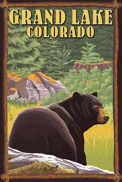 Black Bear in Forest - Grand Lake, Colorado by Lantern Press