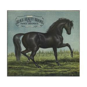Black Beauty Brand - William Hills, California - Citrus Crate Label by Lantern Press