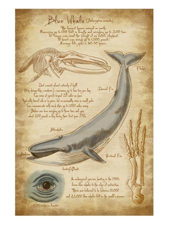 Blue Whale Davinci by Lantern Press
