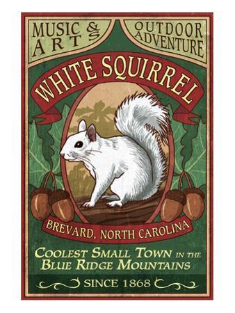 Brevard, North Carolina - White Squirrel