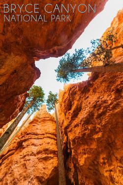 Bryce Canyon National Park, Utah - Navajo Loop Trail by Lantern Press