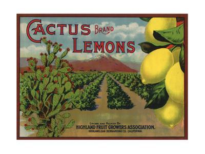 Cactus Brand - Highland, California - Citrus Crate Label by Lantern Press