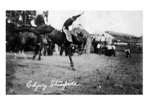 Calgary, Canada - Rodeo; Bucking Horse at the Stampede by Lantern Press