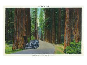 California - Dyerville Flat Scene on the Redwood Highway by Lantern Press