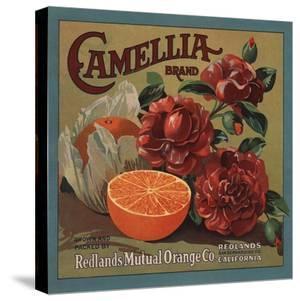 Camelia Brand - Redlands, California - Citrus Crate Label by Lantern Press