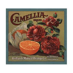Camelia Brand - Redlands, California - Citrus Crate Label by Lantern Press