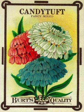 Candytuft Seed Packet by Lantern Press