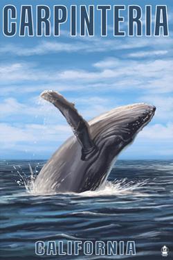 Carpinteria, California - Humpback Whale by Lantern Press