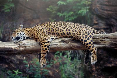 Cheetah Sleeping in Tree by Lantern Press