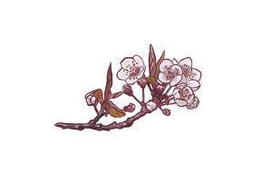 Cherry Blossom - Icon by Lantern Press