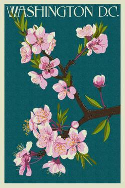 Cherry Blossoms - Washington DC by Lantern Press