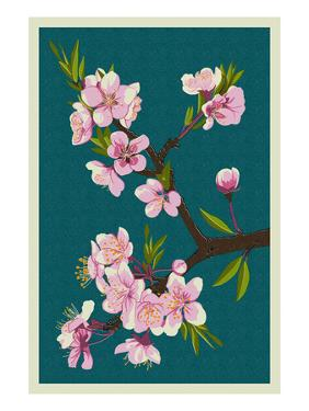 Cherry Blossoms by Lantern Press