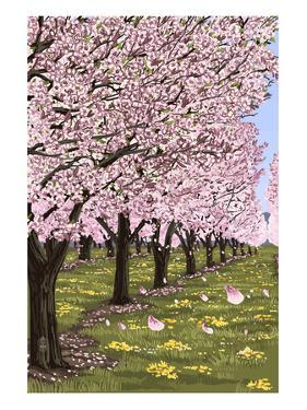 Cherry Orchard Blossoms by Lantern Press