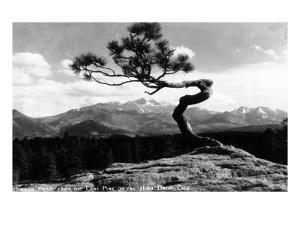 Colorado - Longs Peak from the Lone Pine on High Drive by Lantern Press
