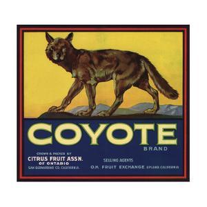 Coyote Brand - Upland, California - Citrus Crate Label by Lantern Press