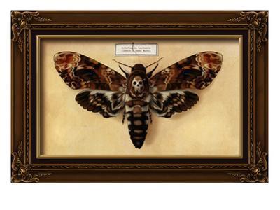 Death's Head Moth by Lantern Press