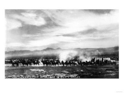 Death Valley, California - View of a Twenty Mule Borax Team